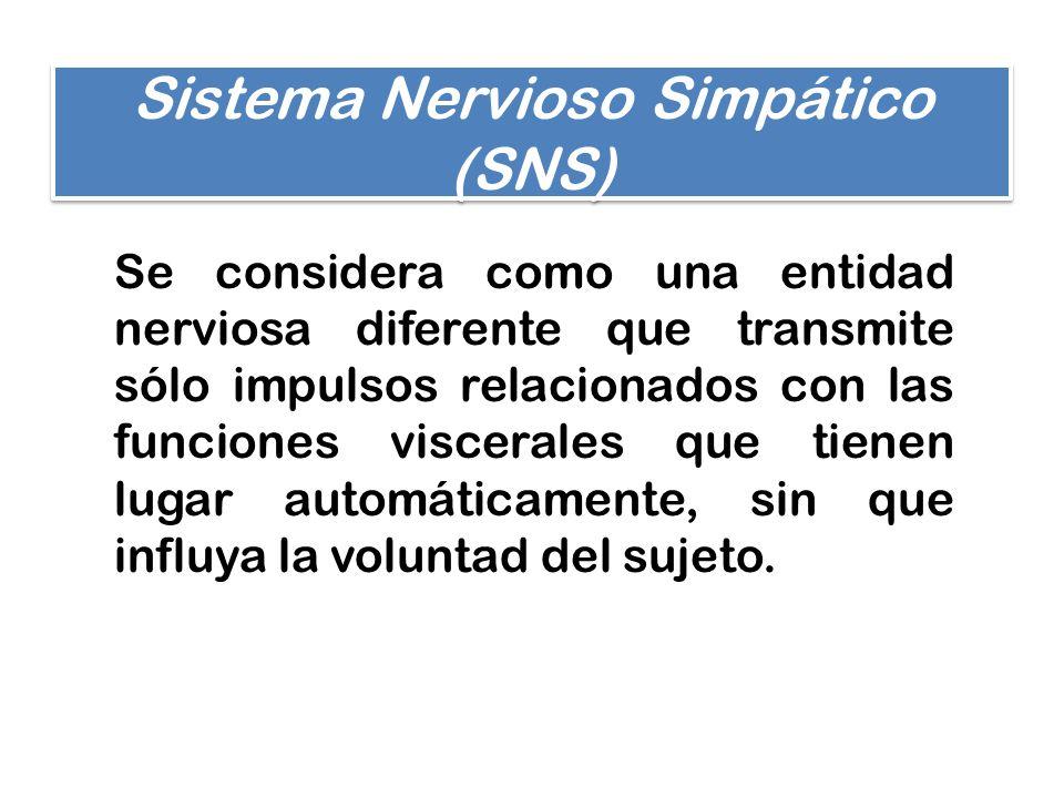 Sistema Nervioso Simpático (SNS)