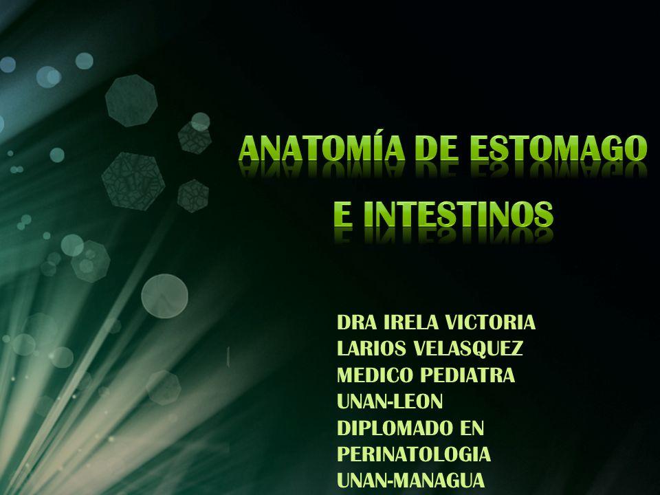 Anatomía de estomago e intestinos