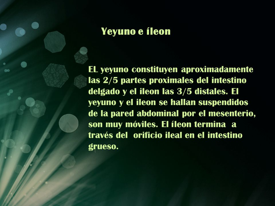 Yeyuno e íleon