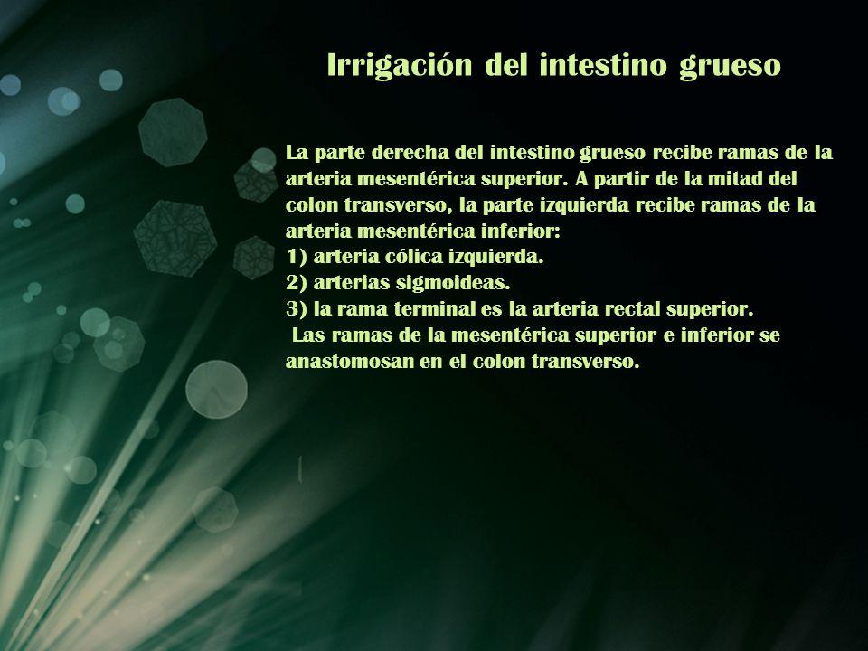 Irrigación del intestino grueso