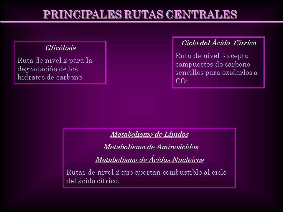 PRINCIPALES RUTAS CENTRALES