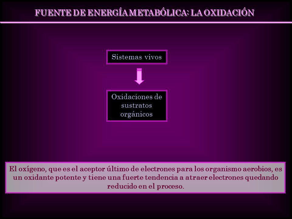 FUENTE DE ENERGÍA METABÓLICA: LA OXIDACIÓN