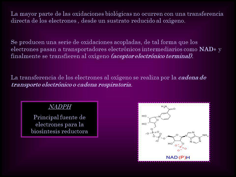 Principal fuente de electrones para la biosíntesis reductora