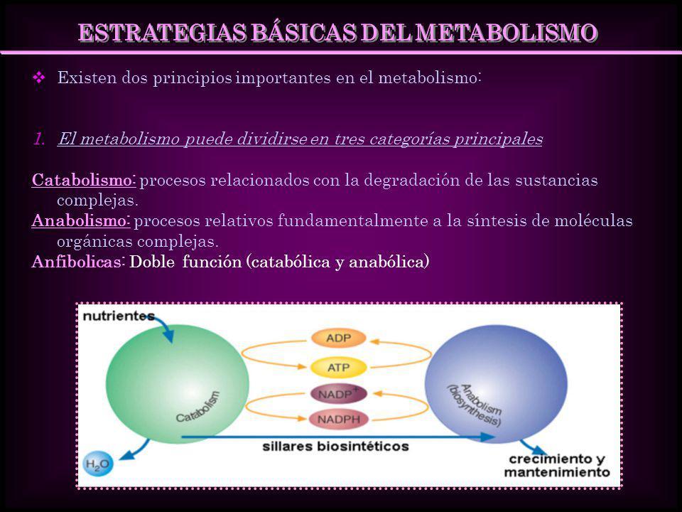 ESTRATEGIAS BÁSICAS DEL METABOLISMO