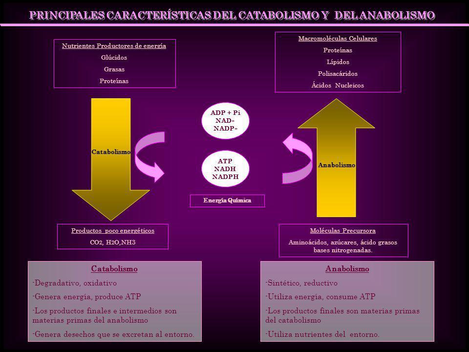 PRINCIPALES CARACTERÍSTICAS DEL CATABOLISMO Y DEL ANABOLISMO