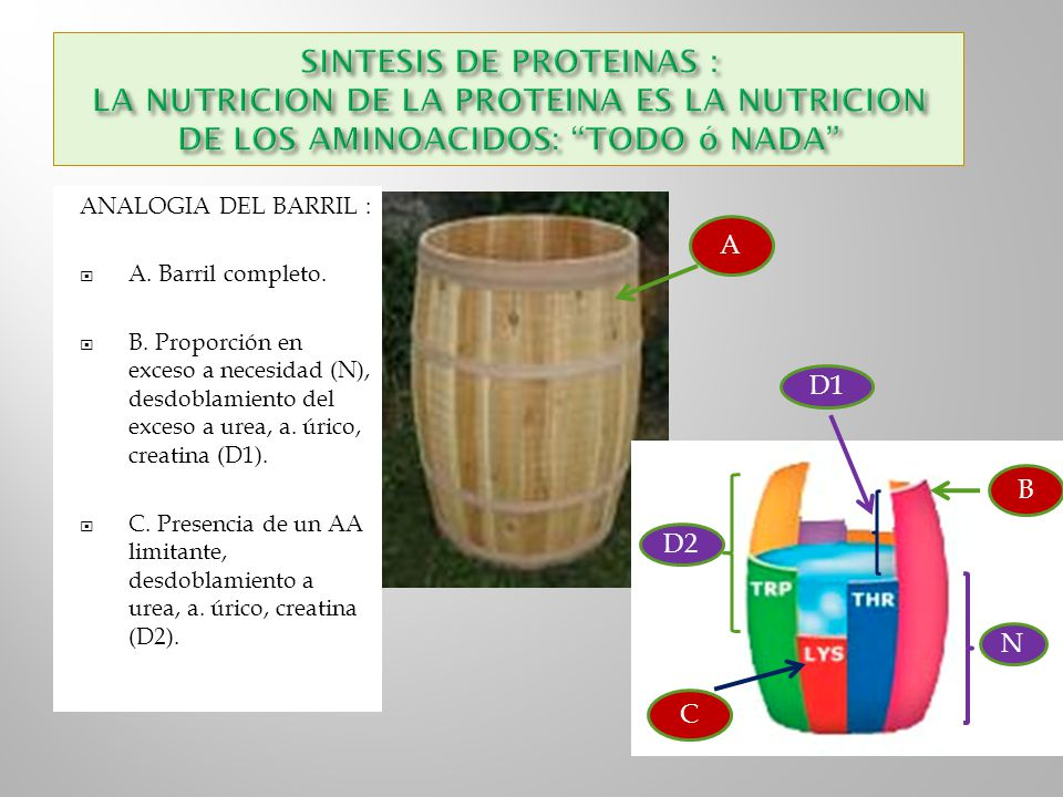 SINTESIS DE PROTEINAS : LA NUTRICION DE LA PROTEINA ES LA NUTRICION DE LOS AMINOACIDOS: TODO ó NADA