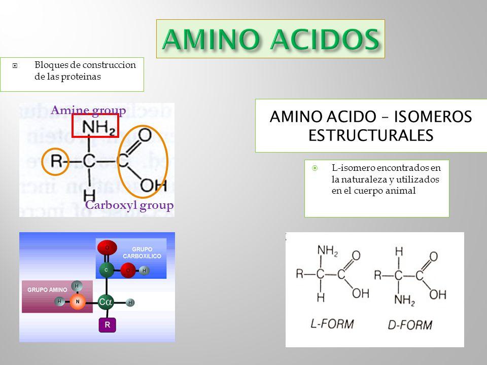 AMINO ACIDO – ISOMEROS ESTRUCTURALES