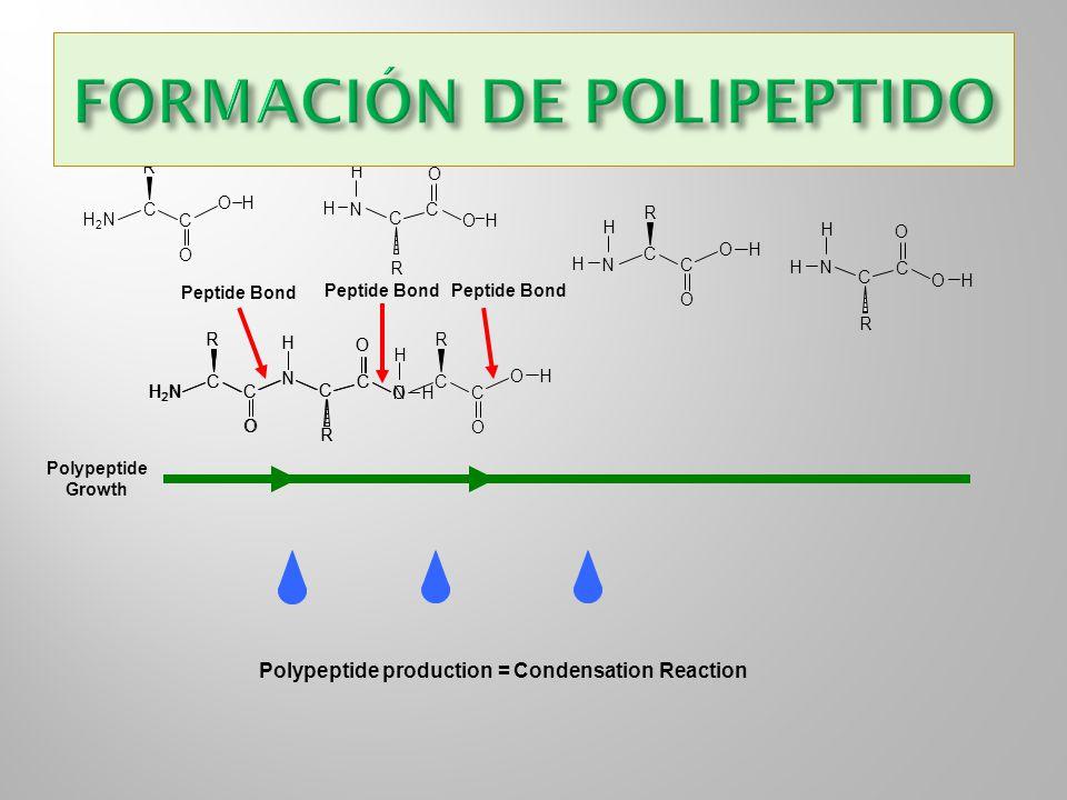 FORMACIÓN DE POLIPEPTIDO