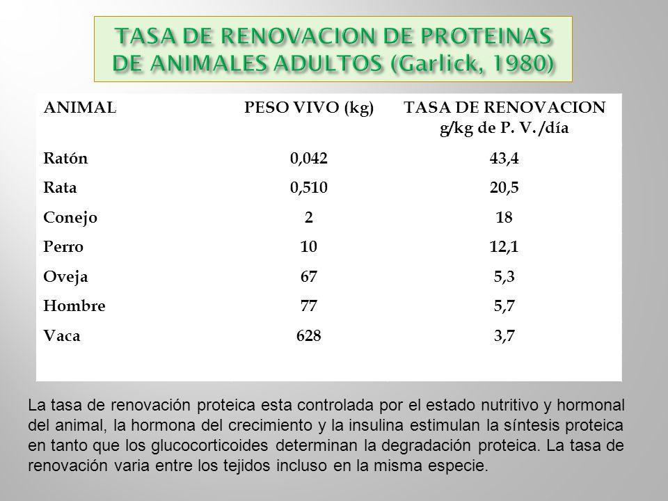 TASA DE RENOVACION DE PROTEINAS DE ANIMALES ADULTOS (Garlick, 1980)