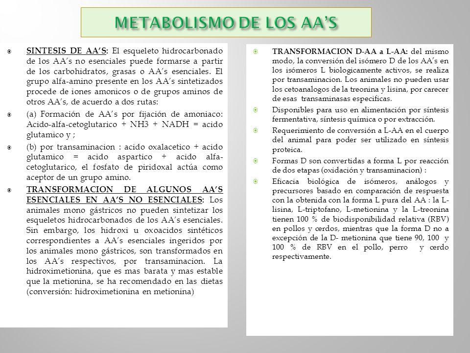 METABOLISMO DE LOS AA'S