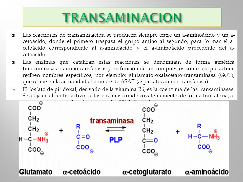 TRANSAMINACION