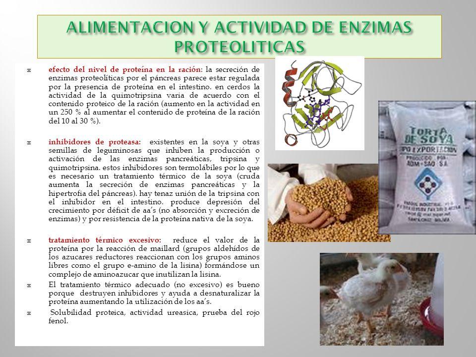 ALIMENTACION Y ACTIVIDAD DE ENZIMAS PROTEOLITICAS