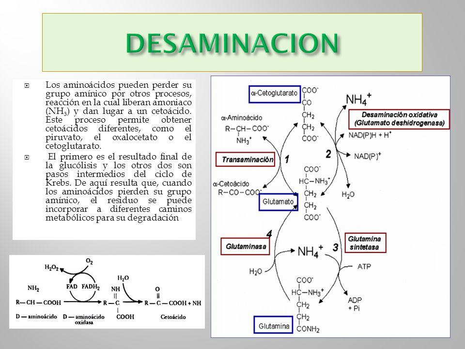 DESAMINACION