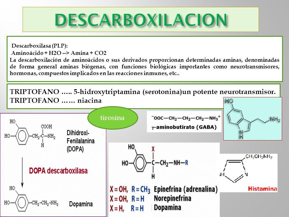 DESCARBOXILACION Descarboxilasa (PLP):