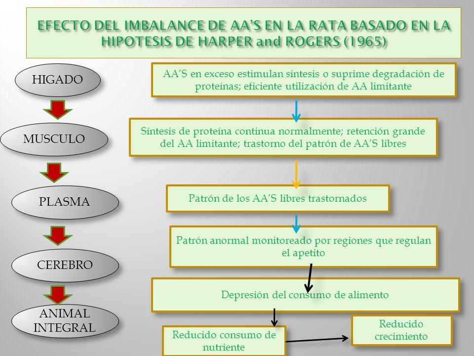 EFECTO DEL IMBALANCE DE AA'S EN LA RATA BASADO EN LA HIPOTESIS DE HARPER and ROGERS (1965)