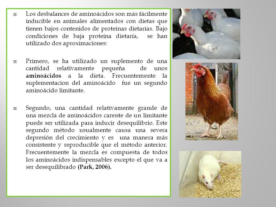 Los desbalances de aminoácidos son más fácilmente inducible en animales alimentados con dietas que tienen bajos contenidos de proteínas dietarías. Bajo condiciones de baja proteína dietaría, se han utilizado dos aproximaciones: