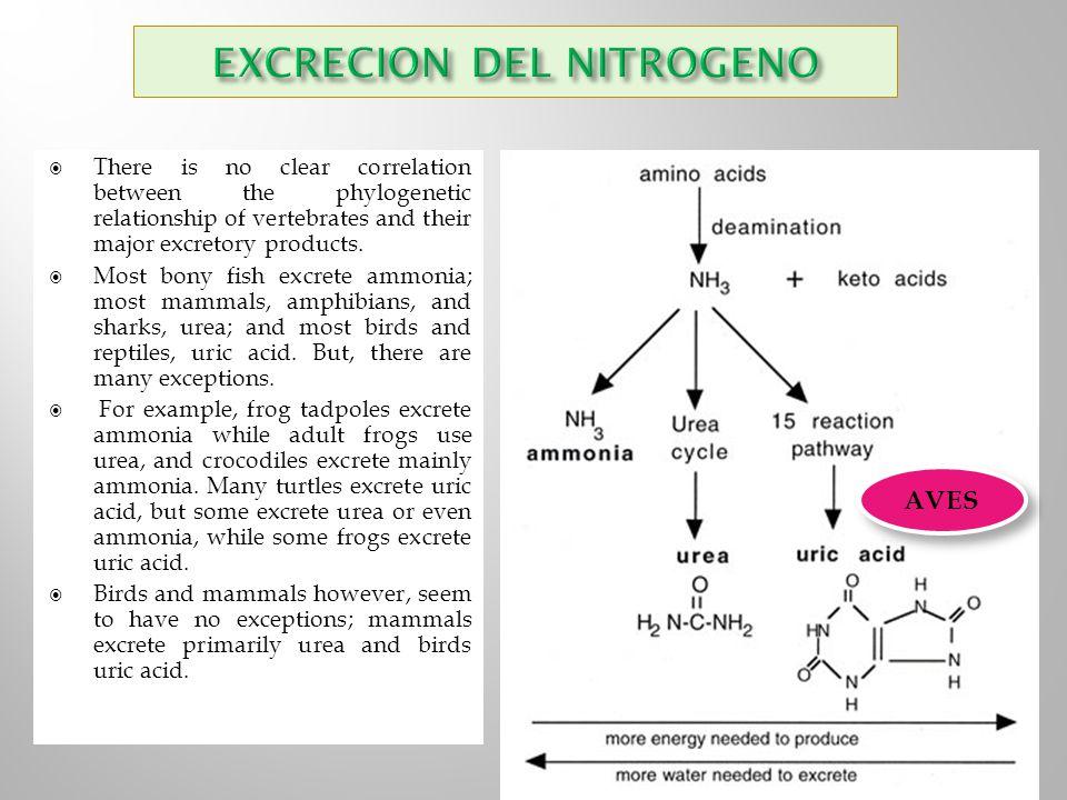 EXCRECION DEL NITROGENO