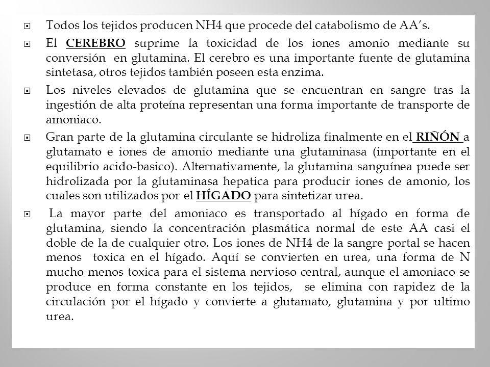 Todos los tejidos producen NH4 que procede del catabolismo de AA's.