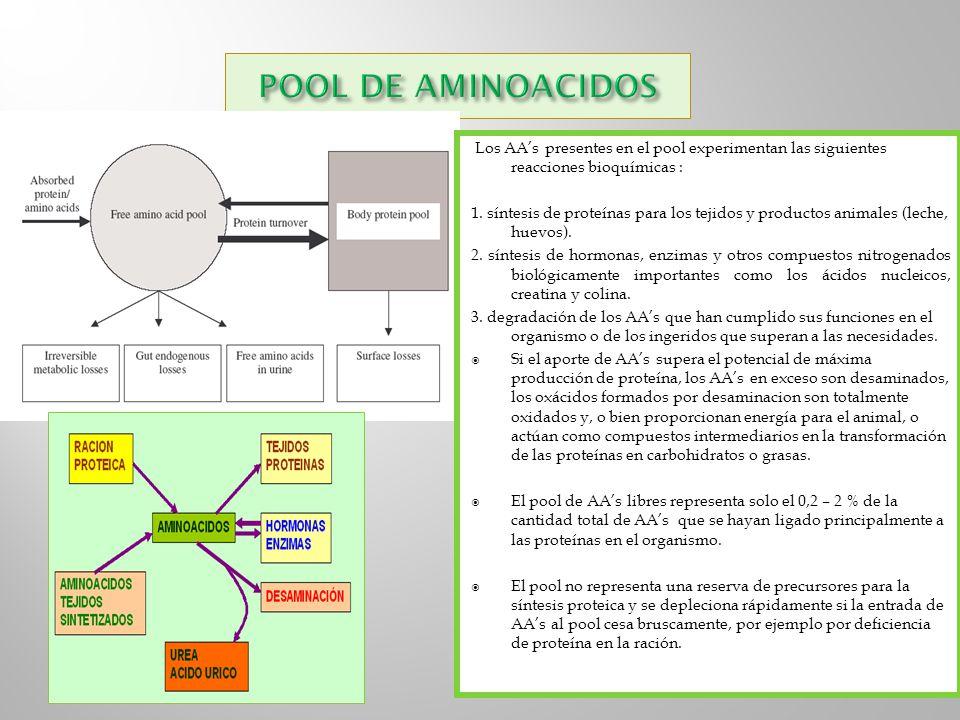 POOL DE AMINOACIDOS Los AA's presentes en el pool experimentan las siguientes reacciones bioquímicas :