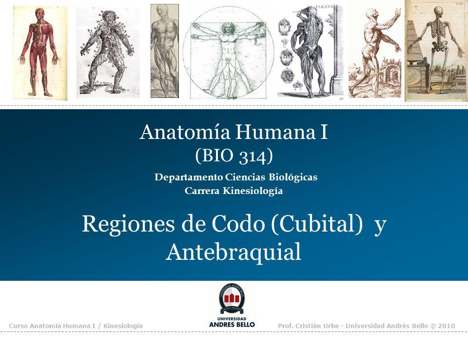 Regiones de Codo (Cubital) y Antebraquial