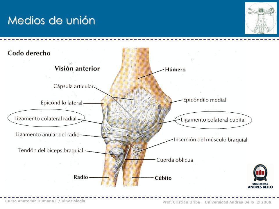 Medios de unión Curso Anatomía Humana I / Kinesiología