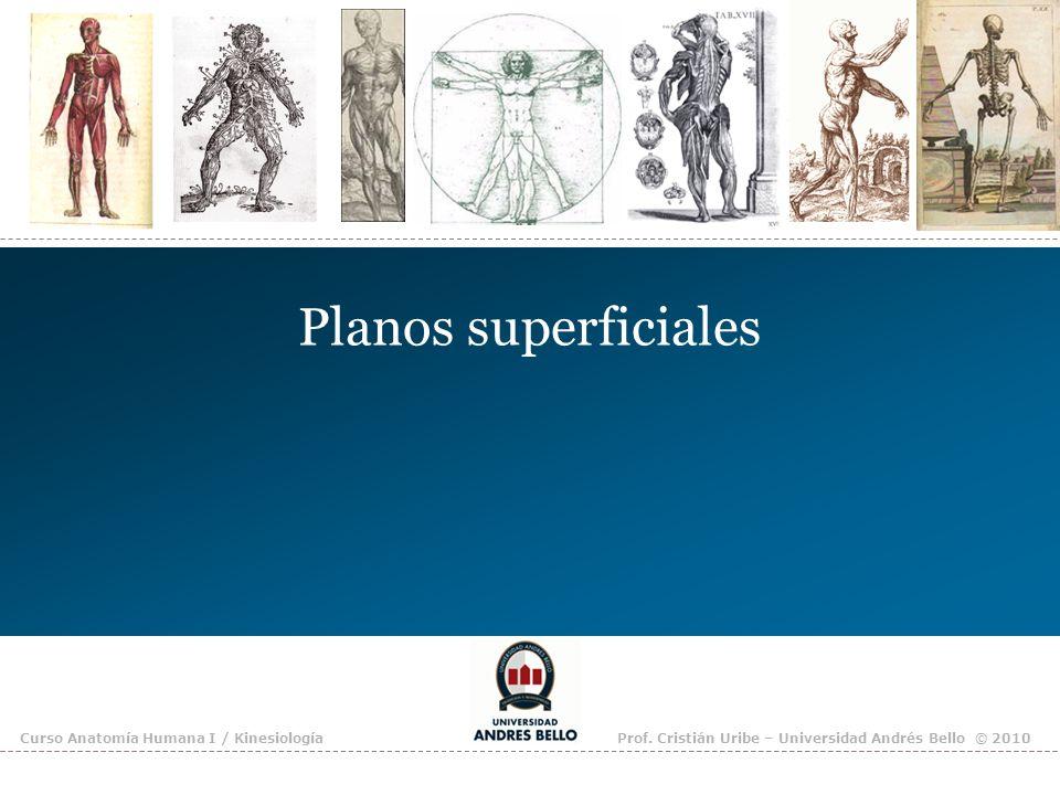 Planos superficiales Curso Anatomía Humana I / Kinesiología