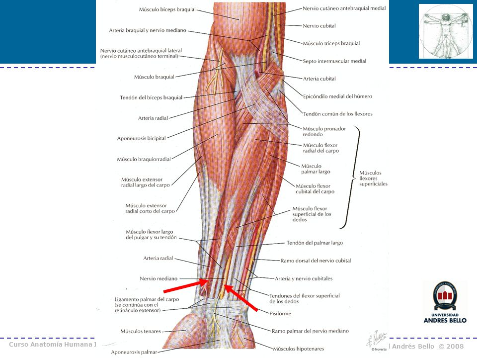 Curso Anatomía Humana I / Kinesiología