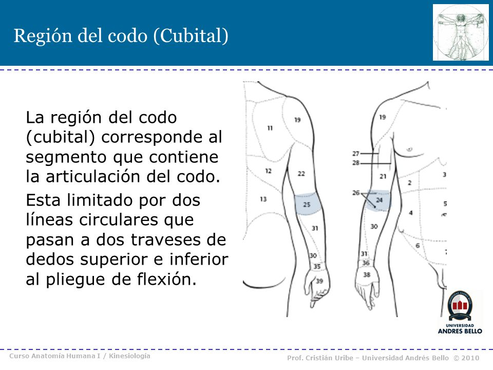 Región del codo (Cubital)