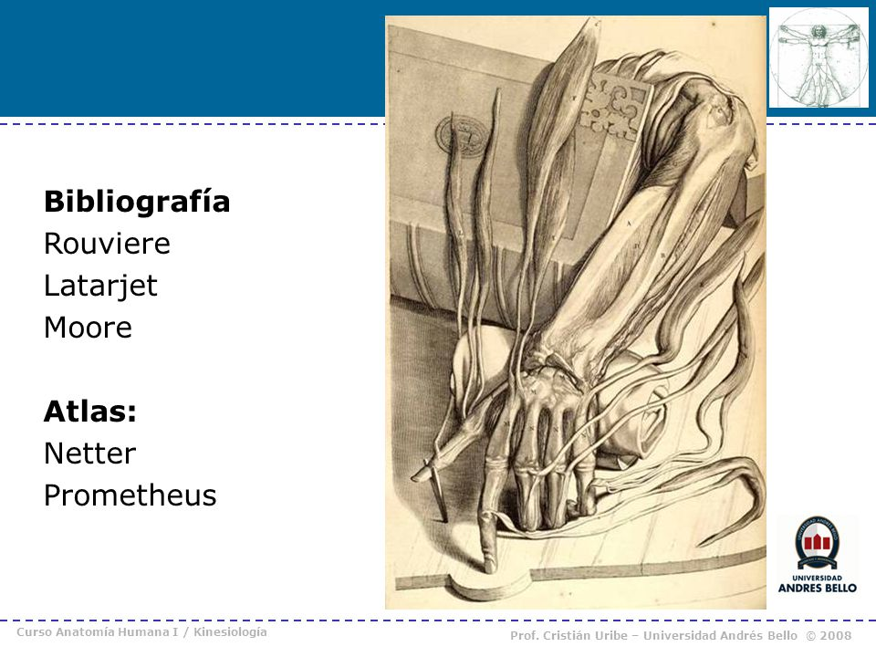 Bibliografía Rouviere Latarjet Moore Atlas: Netter Prometheus
