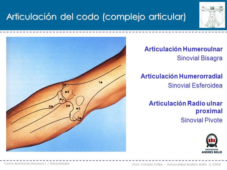 Articulación del codo (complejo articular)