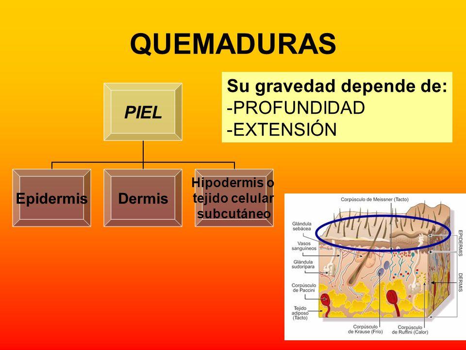 QUEMADURAS Su gravedad depende de: PROFUNDIDAD EXTENSIÓN