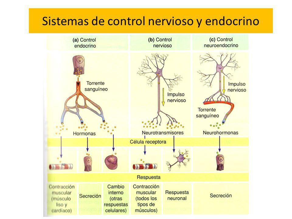 Sistemas de control nervioso y endocrino