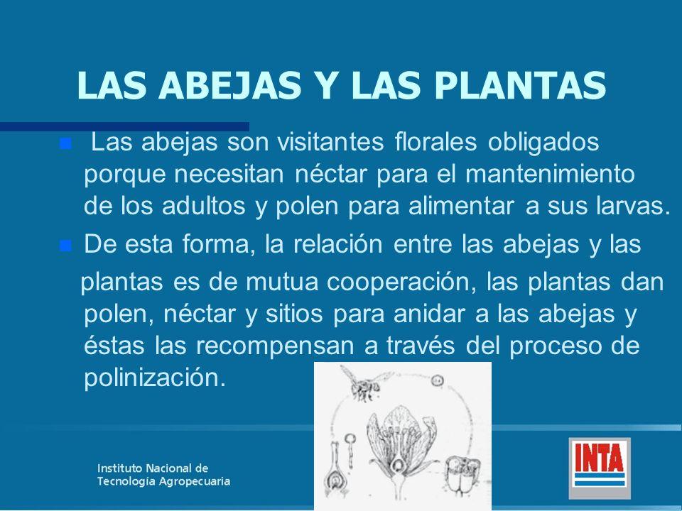 LAS ABEJAS Y LAS PLANTAS
