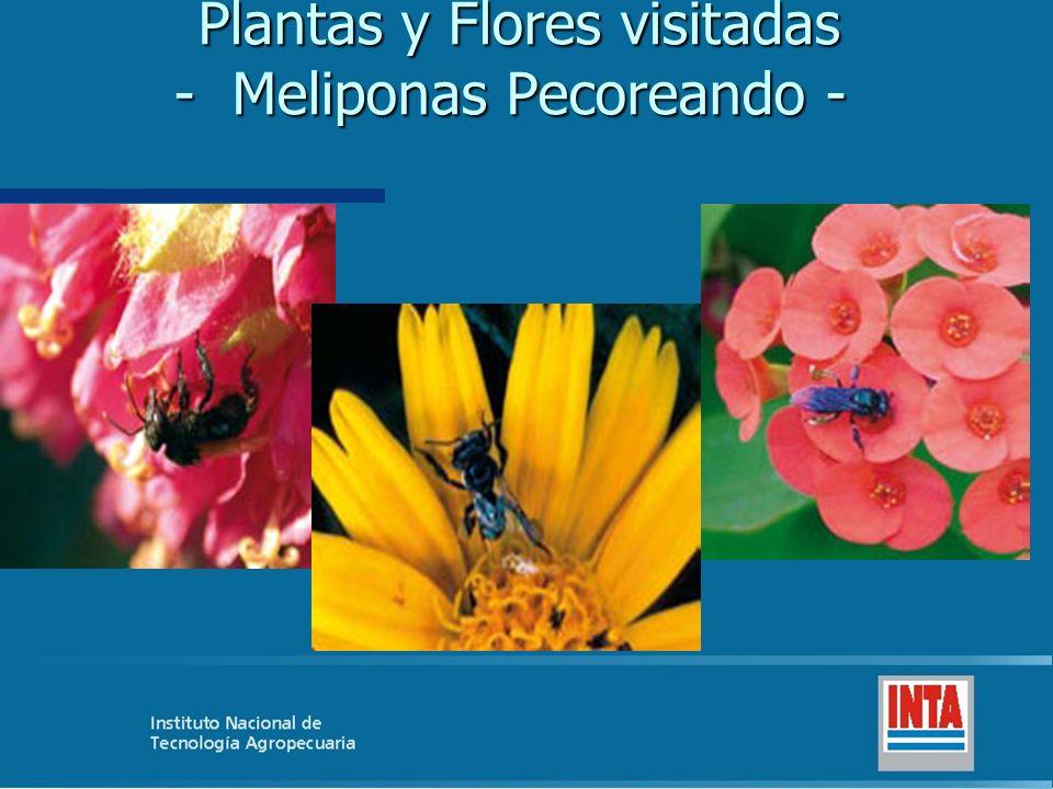 Plantas y Flores visitadas - Meliponas Pecoreando -
