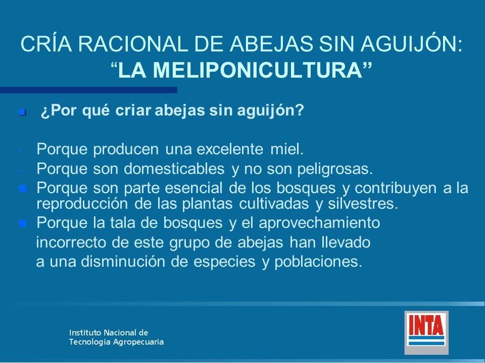 CRÍA RACIONAL DE ABEJAS SIN AGUIJÓN: LA MELIPONICULTURA