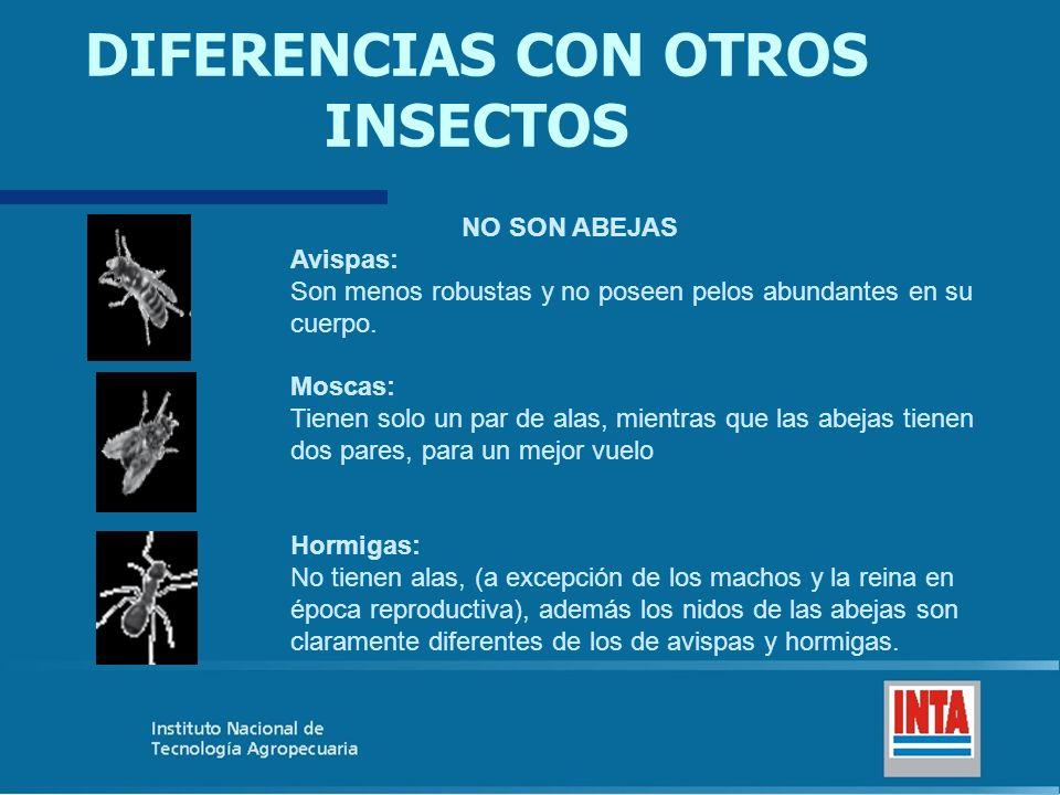DIFERENCIAS CON OTROS INSECTOS