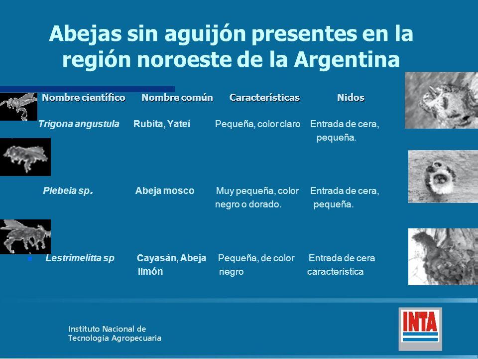 Abejas sin aguijón presentes en la región noroeste de la Argentina