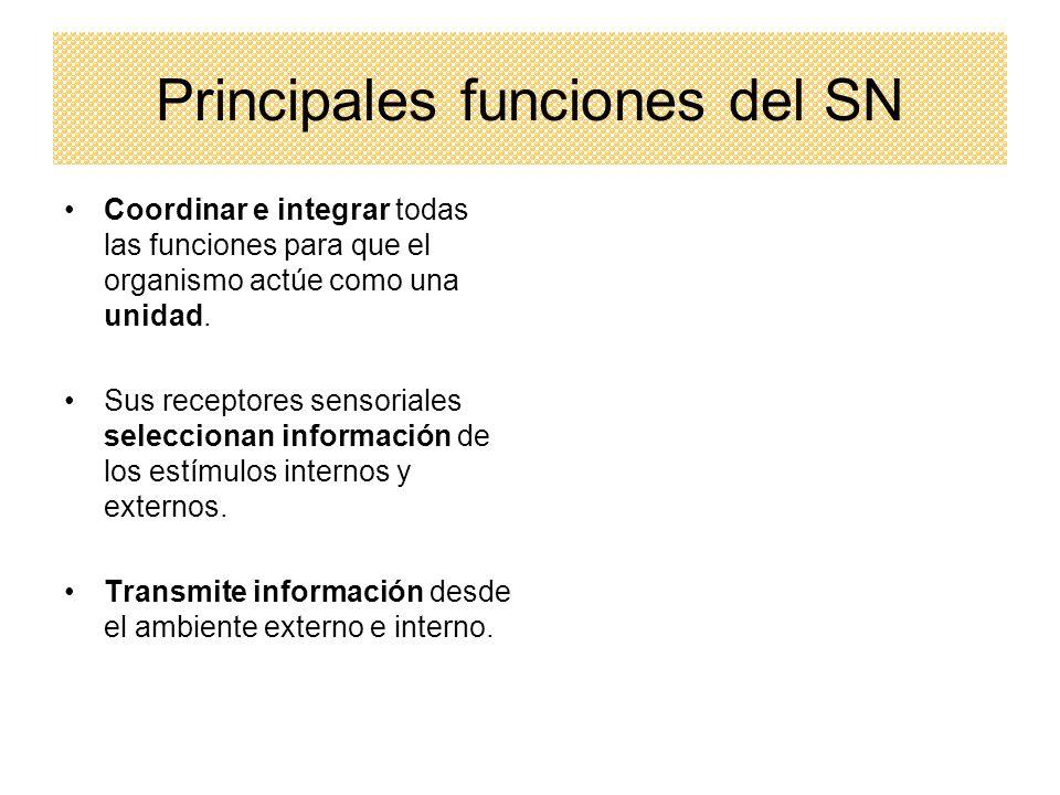 Principales funciones del SN