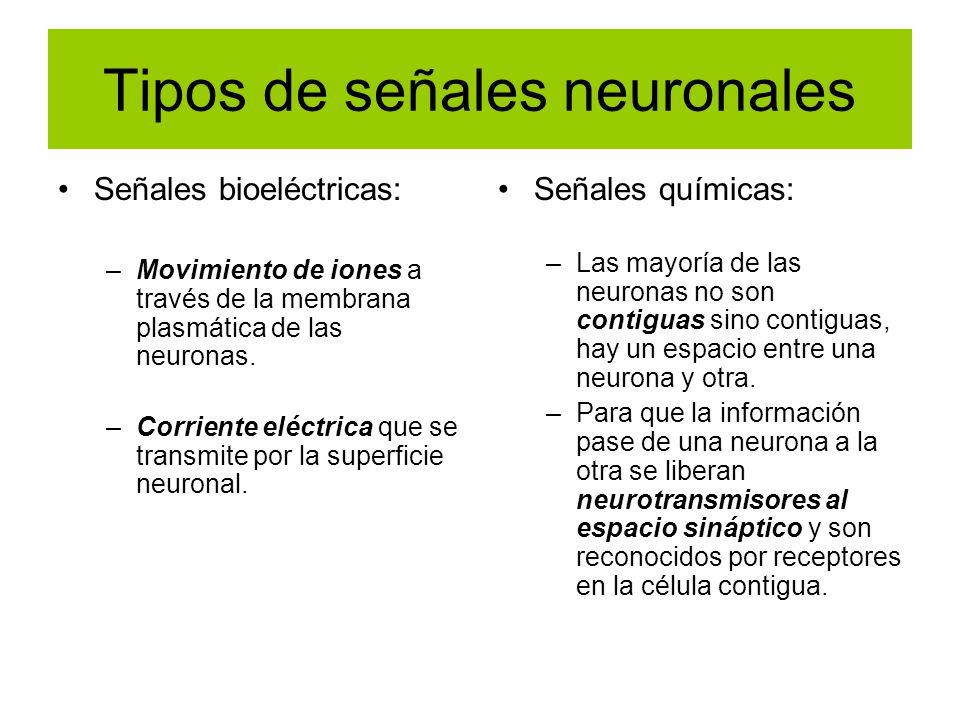 Tipos de señales neuronales