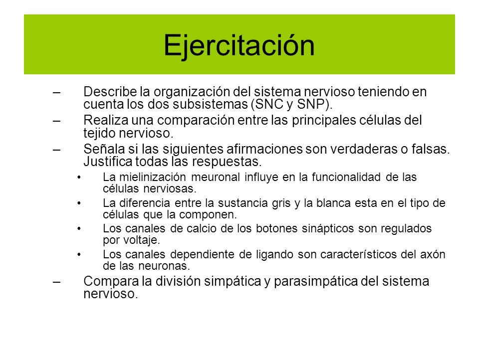 Ejercitación Describe la organización del sistema nervioso teniendo en cuenta los dos subsistemas (SNC y SNP).