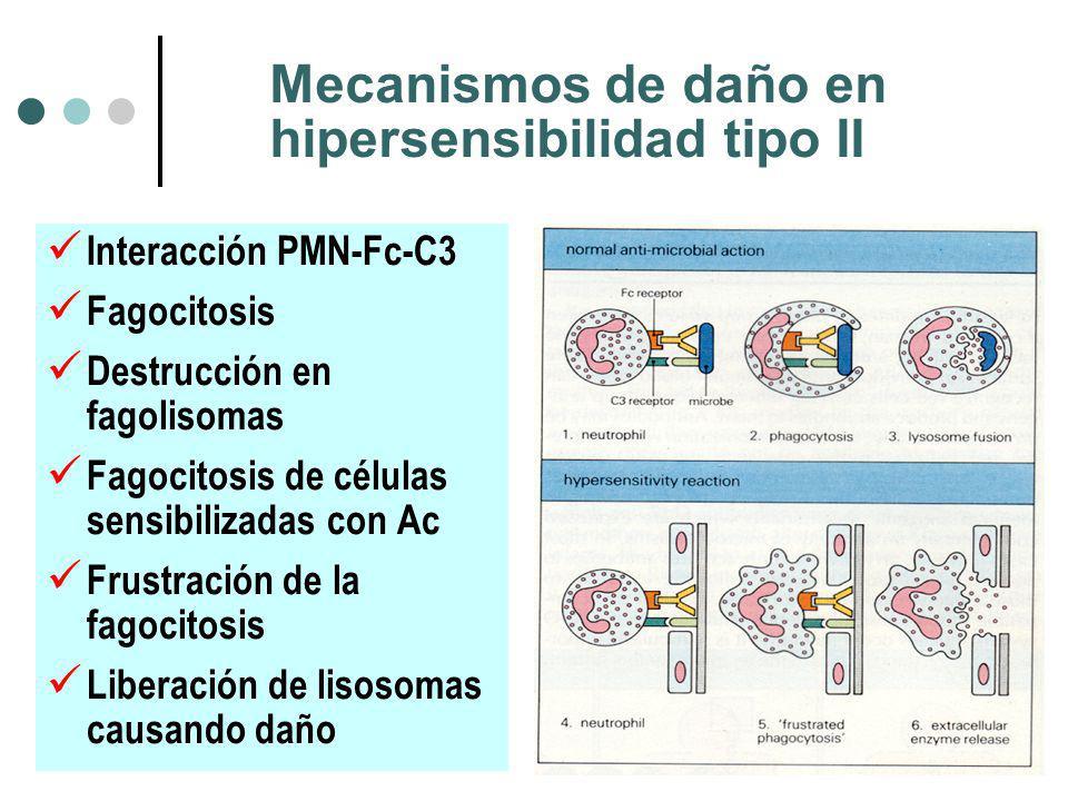 Mecanismos de daño en hipersensibilidad tipo II