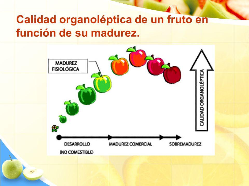 Calidad organoléptica de un fruto en función de su madurez.