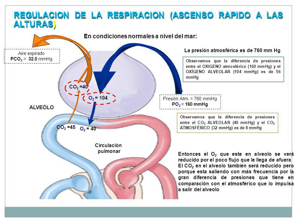 REGULACION DE LA RESPIRACION (ASCENSO RAPIDO A LAS ALTURAS)