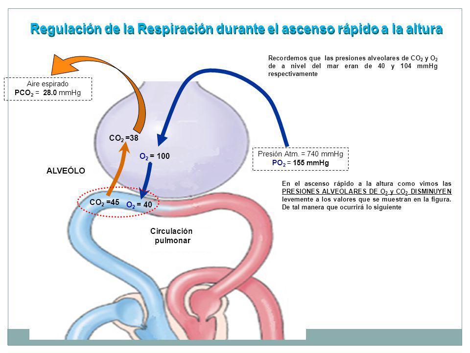 Regulación de la Respiración durante el ascenso rápido a la altura