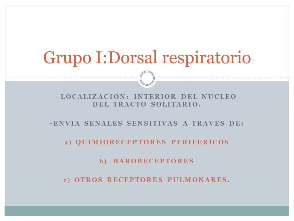 Grupo I:Dorsal respiratorio