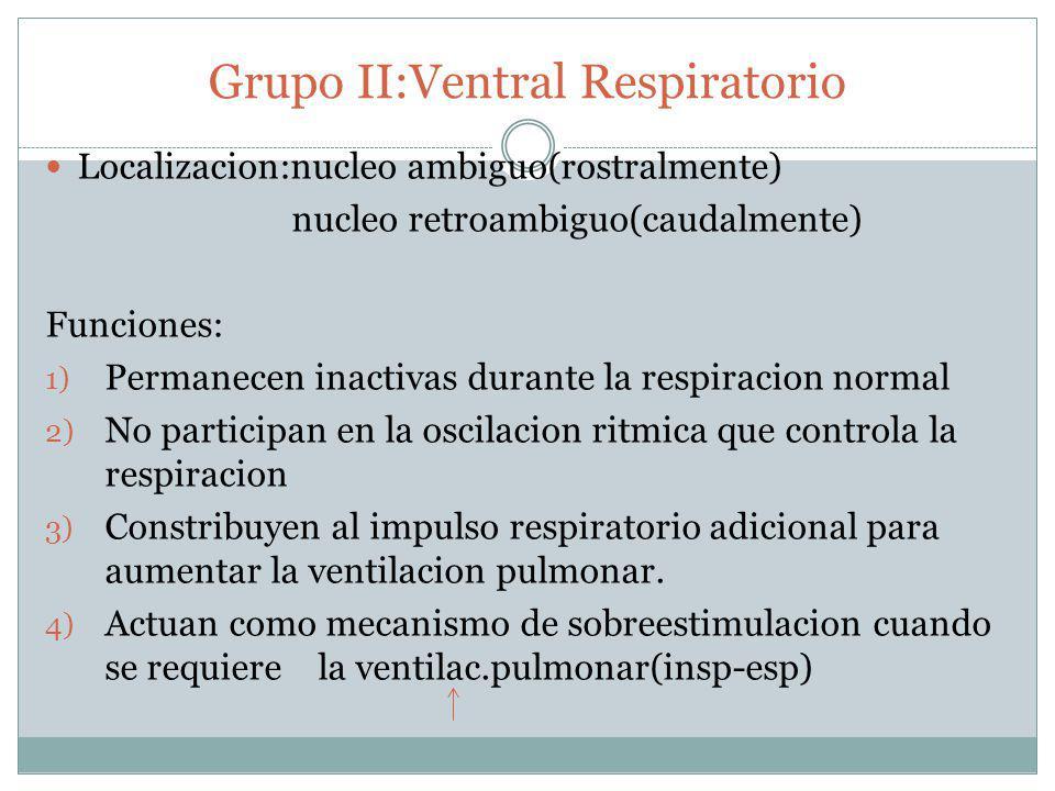 Grupo II:Ventral Respiratorio