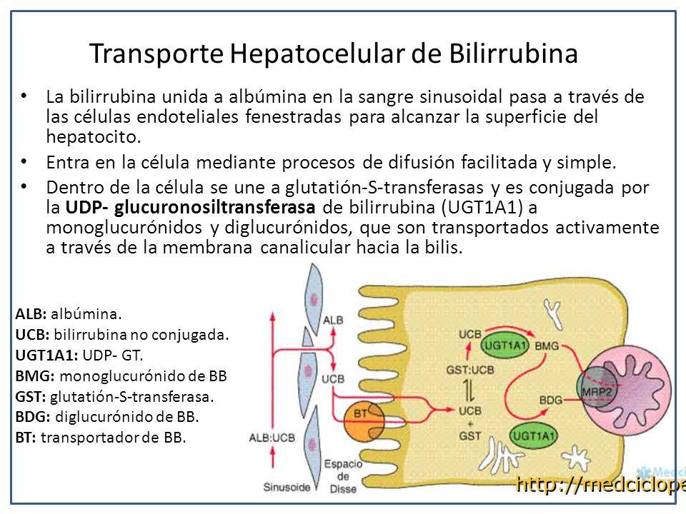 Transporte Hepatocelular de Bilirrubina