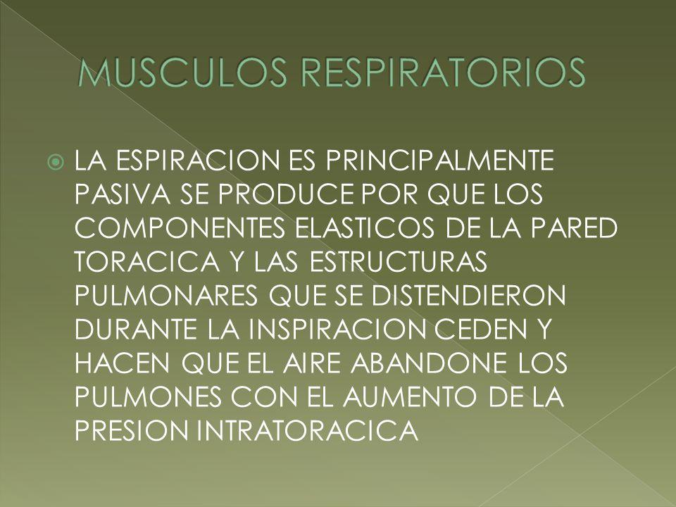 MUSCULOS RESPIRATORIOS