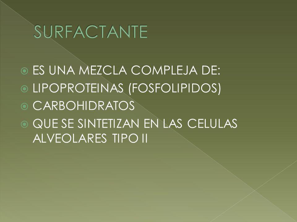 SURFACTANTE ES UNA MEZCLA COMPLEJA DE: LIPOPROTEINAS (FOSFOLIPIDOS)
