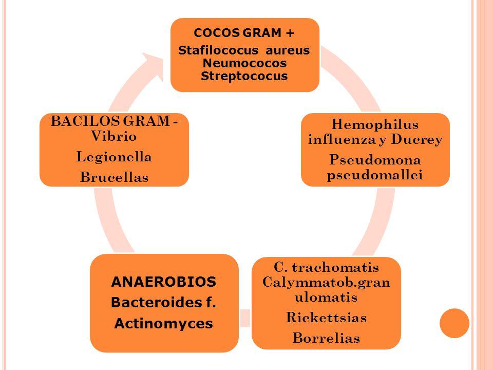 Hemophilus influenza y Ducrey Pseudomona pseudomallei